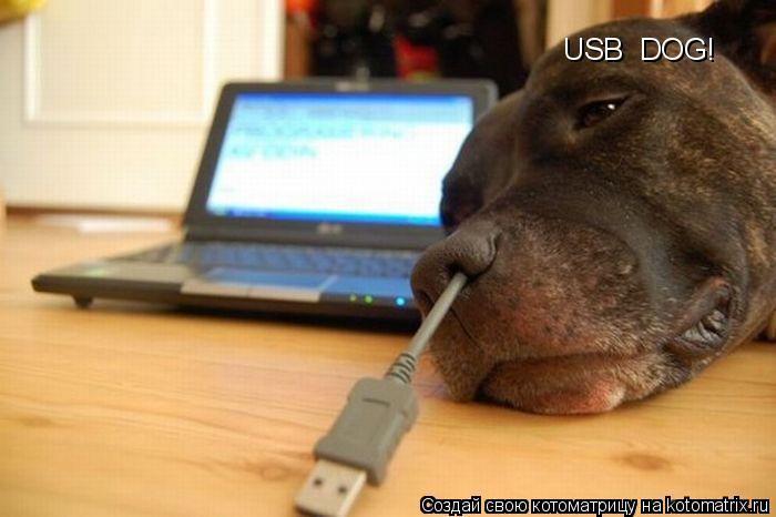Котоматрица: USB  DOG!