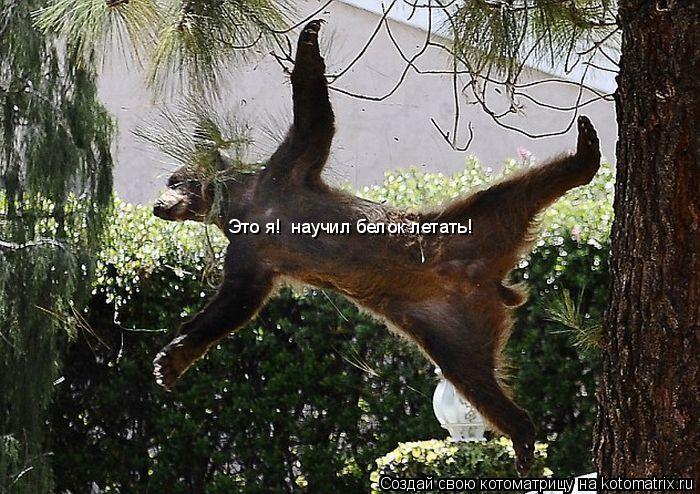 Котоматрица: Это я!  научил белок летать!
