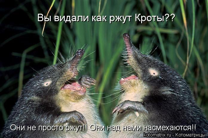Котоматрица: Вы видали как ржут Кроты?? Они не просто ржут!! Они над нами насмехаются!!