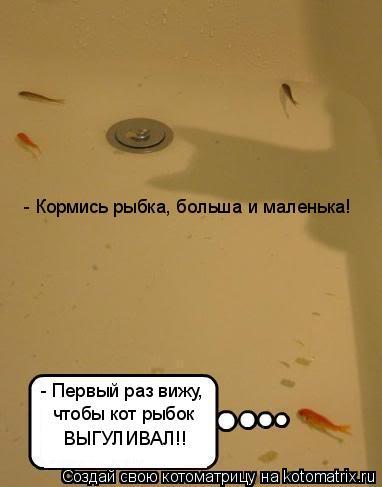 Котоматрица: - Первый раз вижу, чтобы кот рыбок ВЫГУЛИВАЛ!! - Кормись рыбка, больша и маленька!