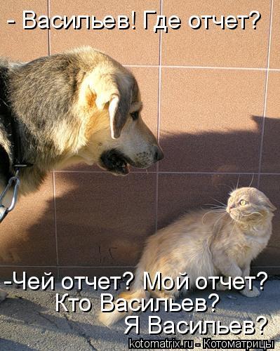 Котоматрица: - Васильев! Где отчет? Я Васильев? -Чей отчет? Мой отчет? Кто Васильев?