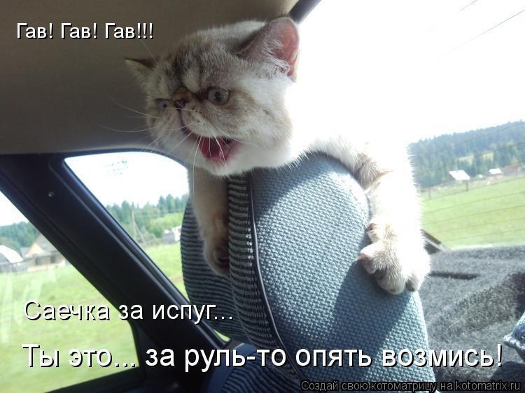 Котоматрица: Гав! Гав! Гав!!! Саечка за испуг... Ты это... за руль-то опять возмись!