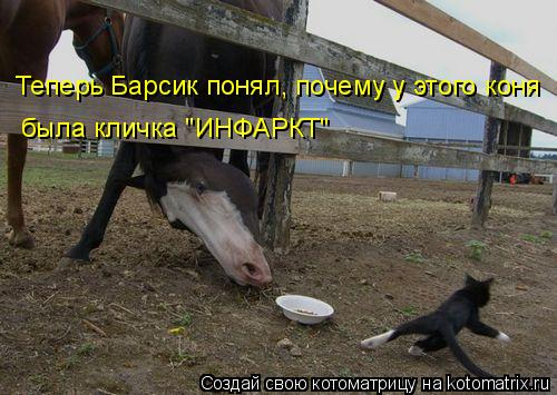 """Котоматрица: Теперь Барсик понял, почему у этого коня была кличка """"ИНФАРКТ"""""""