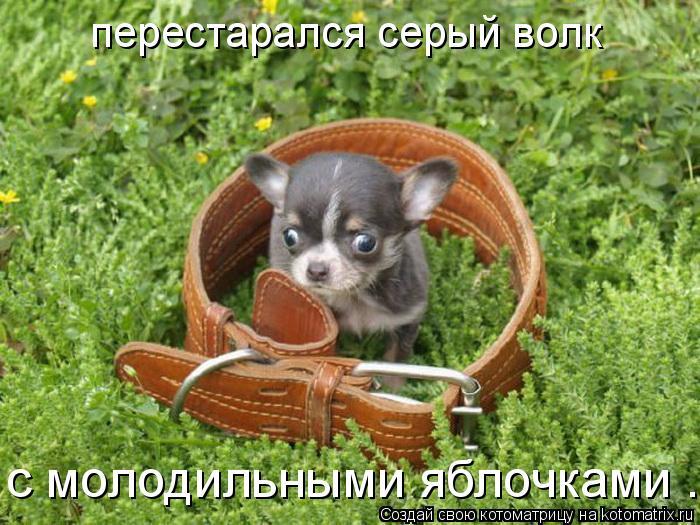 Котоматрица: перестарался серый волк с молодильными яблочками ...