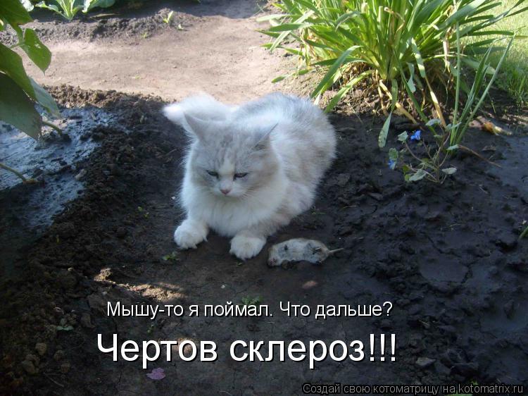 Котоматрица: Мышу-то я поймал. Что дальше? Чертов склероз!!!