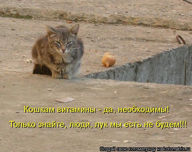 Котоматрица: Кошкам витамины - да, необходимы! Только знайте, люди, лук мы есть не будем!!!