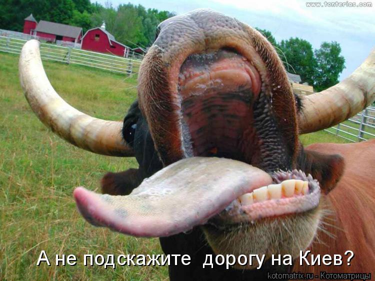 Котоматрица: А не подскажите  дорогу на Киев?