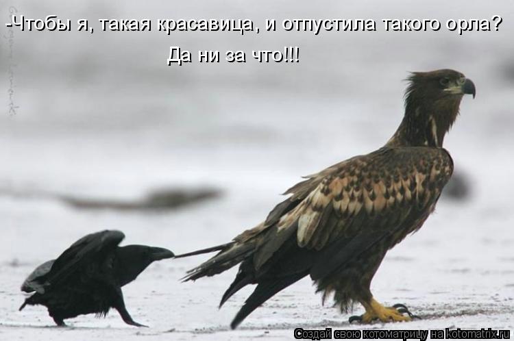 Котоматрица: -Чтобы я, такая красавица, и отпустила такого орла?  Да ни за что!!!