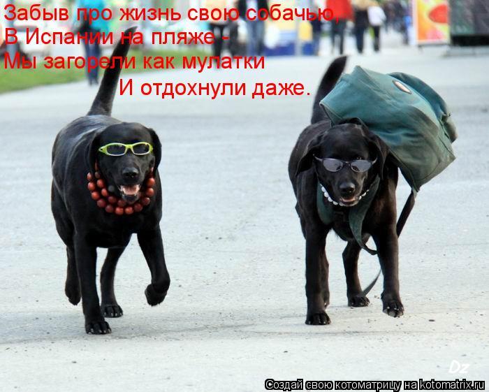 Котоматрица: Забыв про жизнь свою собачью,  В Испании на пляже - Мы загорели как мулатки  И отдохнули даже.
