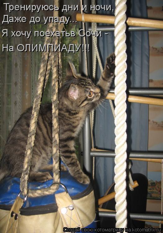 Котоматрица: Тренируюсь дни и ночи, Я хочу поехатьв Сочи - На ОЛИМПИАДУ!!! Даже до упаду...