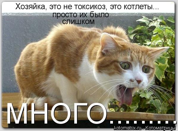 Котоматрица: Хозяйка, это не токсикоз, это котлеты... просто их было  слишком МНОГО.............................................