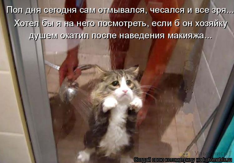 Котоматрица: Пол дня сегодня сам отмывался, чесался и все зря... Хотел бы я на него посмотреть, если б он хозяйку  душем окатил после наведения макияжа…..