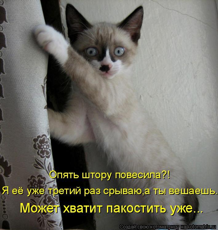 http://kotomatrix.ru/images/lolz/2010/06/06/595068.jpg