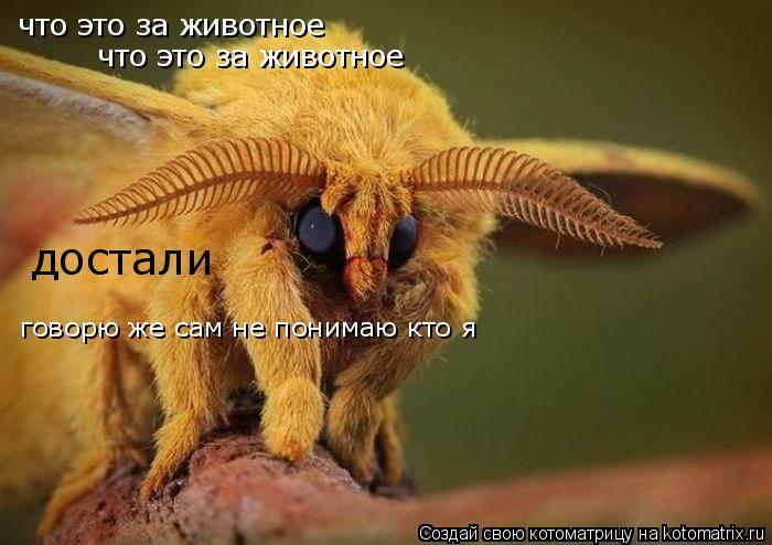 Котоматрица: что это за животное что это за животное достали говорю же сам не понимаю кто я