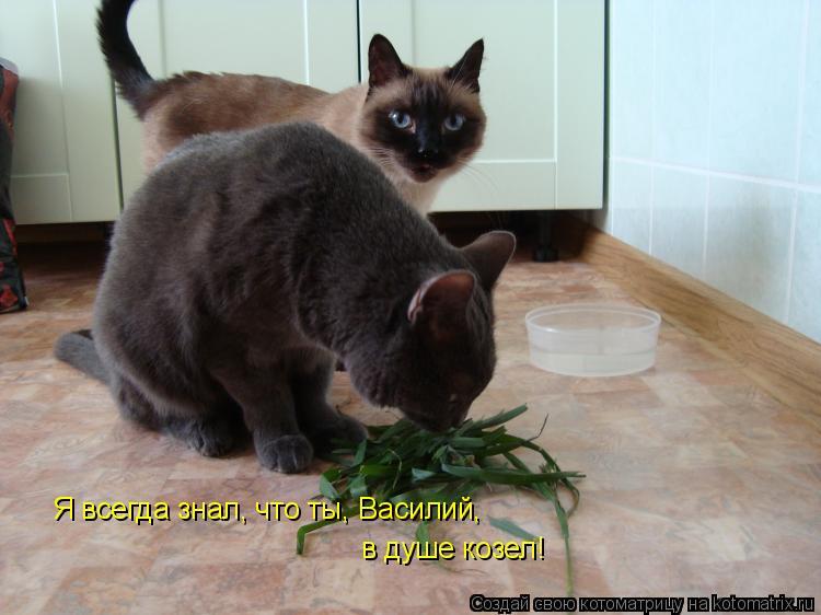 Котоматрица: Я всегда знал, что ты, Василий,  в душе козел!
