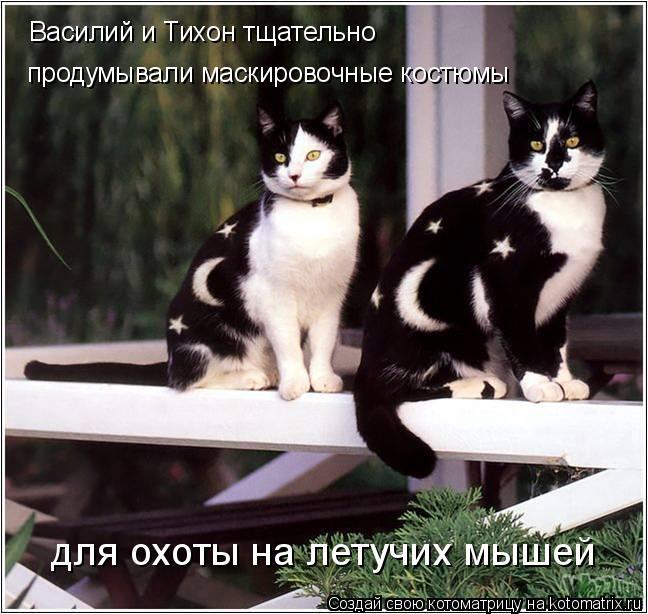 Котоматрица: Василий и Тихон тщательно продумывали маскировочные костюмы для охоты на летучих мышей