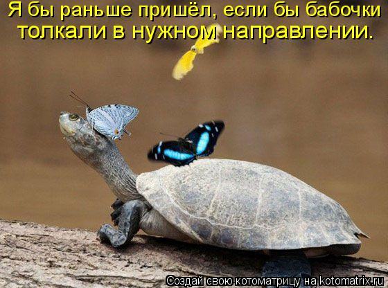 Котоматрица: Я бы раньше пришёл, если бы бабочки  толкали в нужном направлении.