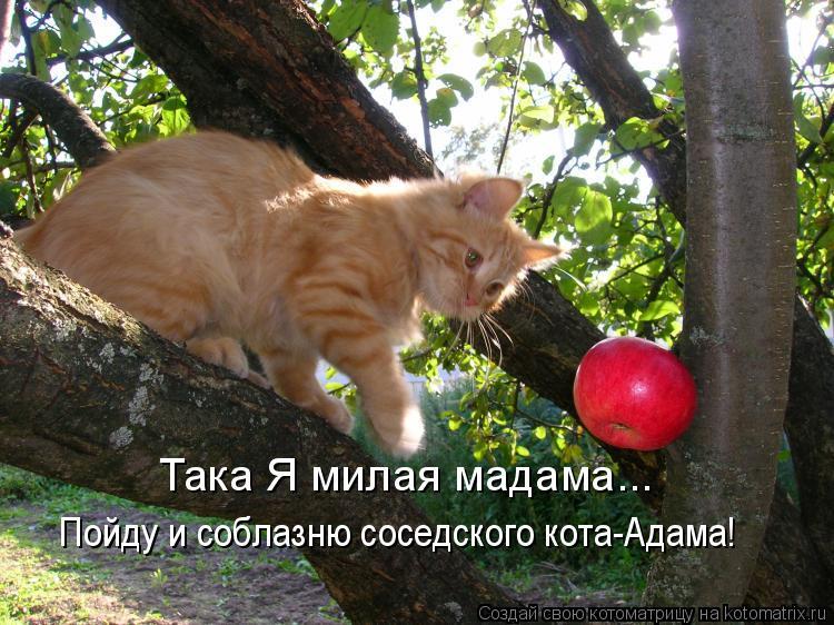 Котоматрица: Така Я милая мадама... Пойду и соблазню соседского кота-Адама!