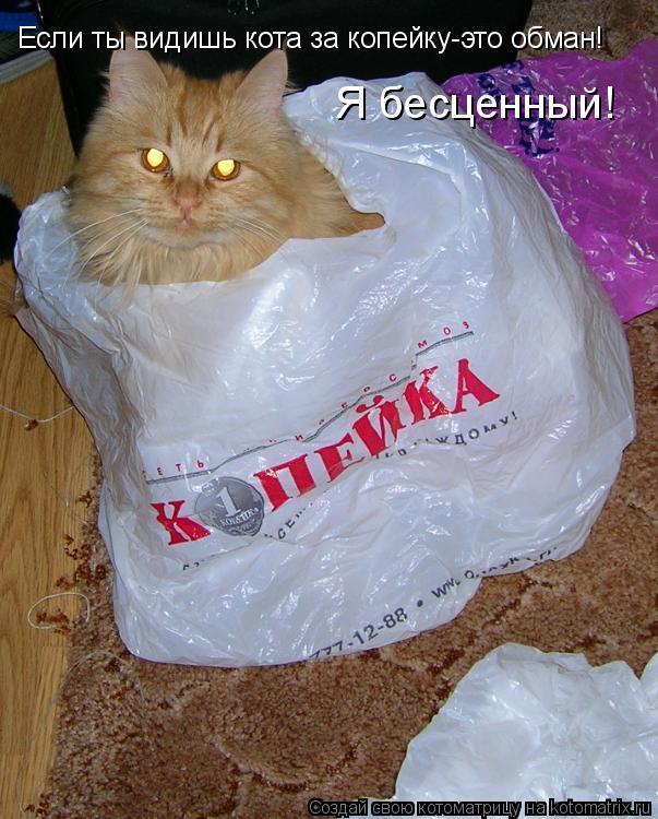 Котоматрица: Если ты видишь кота за копейку-это обман! Я бесценный!