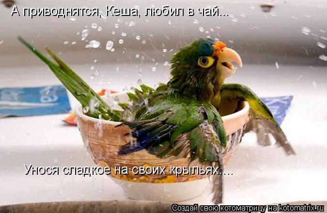 Котоматрица: А приводнятся, Кеша, любил в чай... Унося сладкое на своих крыльях....