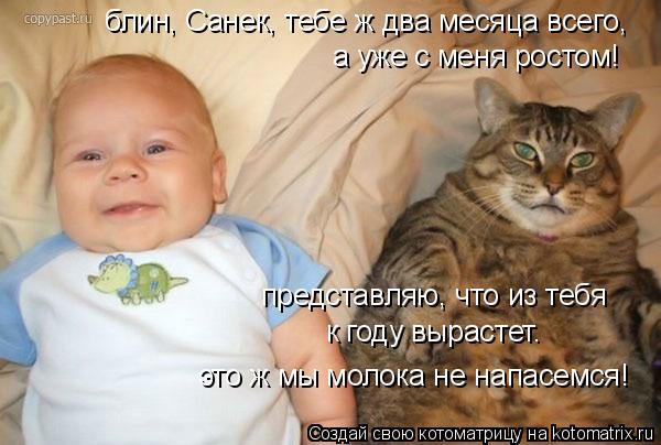 Котоматрица: блин, Санек, тебе ж два месяца всего, а уже с меня ростом! представляю, что из тебя  к году вырастет. это ж мы молока не напасемся!