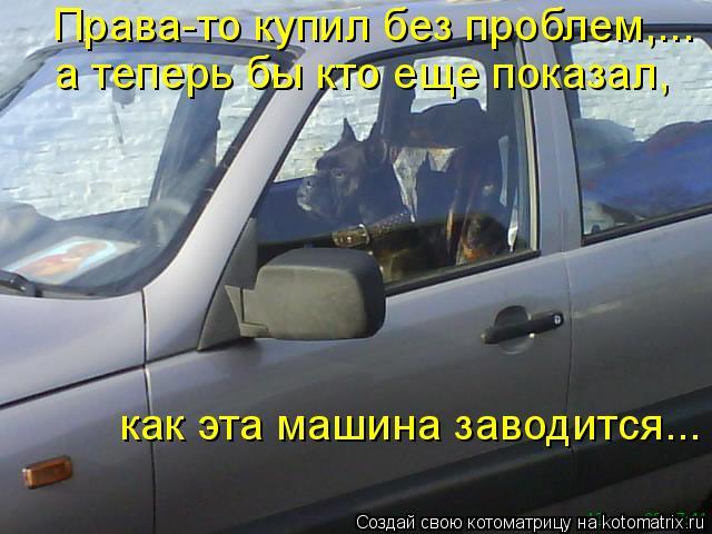 Котоматрица: Права-то купил без проблем,...  а теперь бы кто еще показал,   как эта машина заводится...
