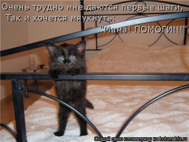 """Котоматрица: Очень трудно мне даются первые шаги, Так и хочется мяукнуть:  """"Мама! ПОМОГИ!!!"""""""