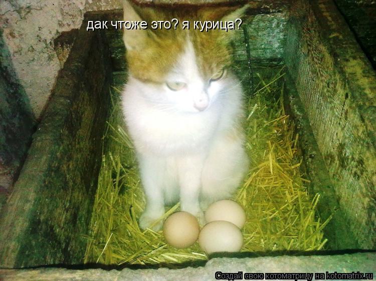 Котоматрица: дак чтоже это? я курица?