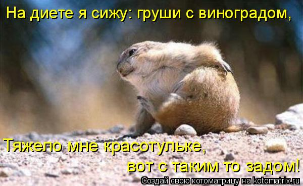 Котоматрица: На диете я сижу: груши с виноградом,  Тяжело мне красотульке,   вот с таким то задом!