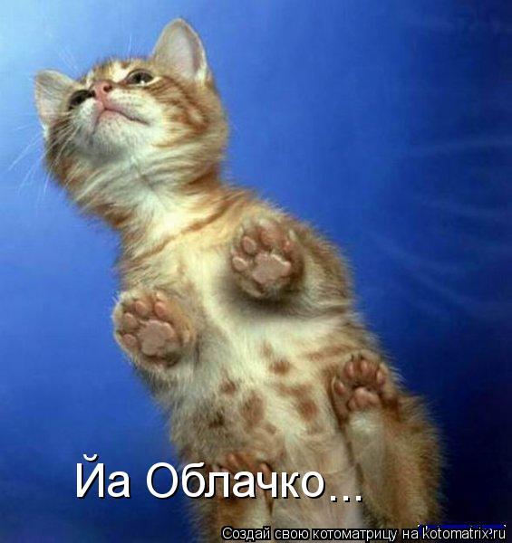 Котоматрица: Йа Облачко ...
