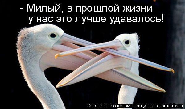 Котоматрица: - Милый, в прошлой жизни  у нас это лучше удавалось!