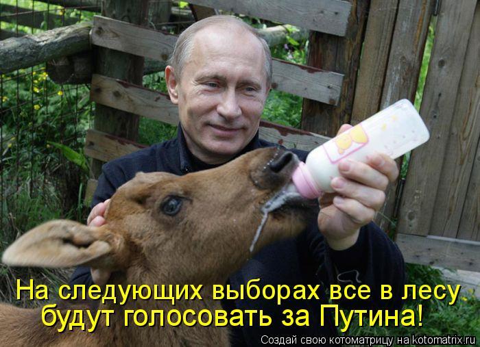 Котоматрица: На следующих выборах все в лесу  будут голосовать за Путина!