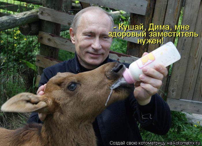 Котоматрица: - Кушай, Дима, мне здоровый заместитель нужен!