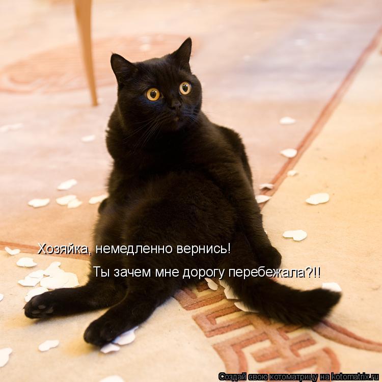 Котоматрица: Хозяйка, немедленно вернись! Ты зачем мне дорогу перебежала?!!