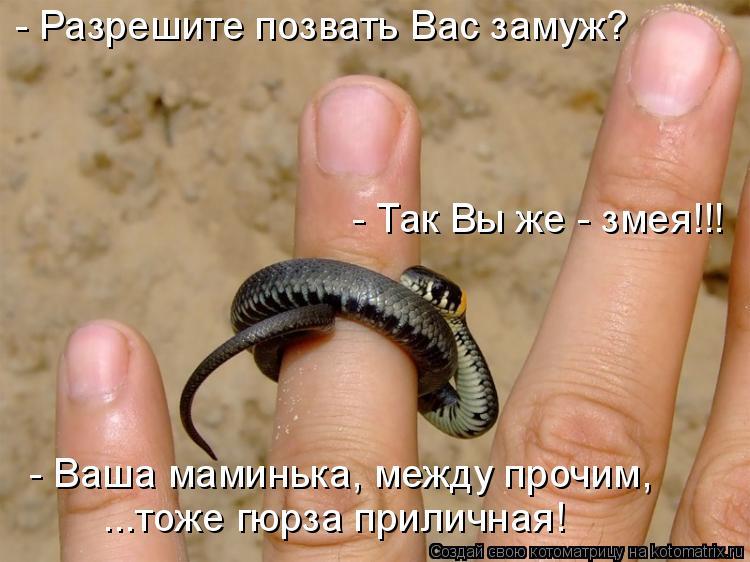 Котоматрица: - Разрешите позвать Вас замуж? - Так Вы же - змея!!! - Ваша маминька, между прочим,  ...тоже гюрза приличная!
