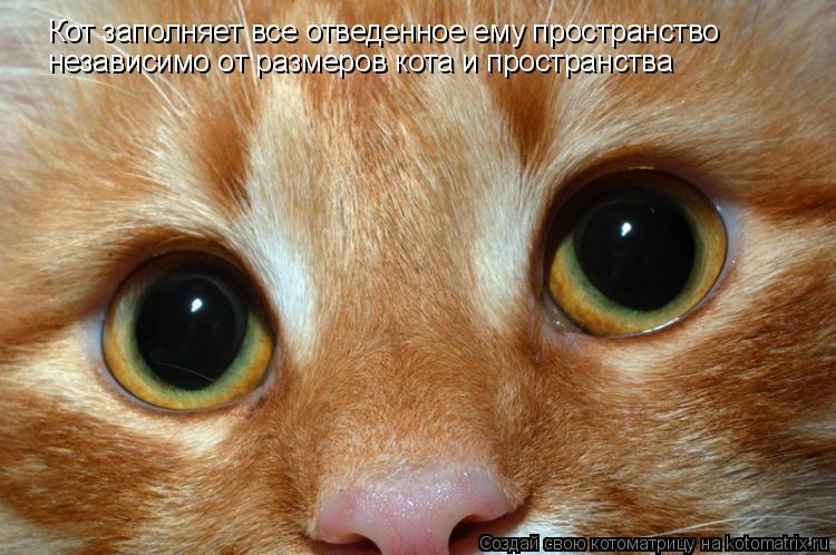 Котоматрица: Кот заполняет все отведенное ему пространство независимо от размеров кота и пространства