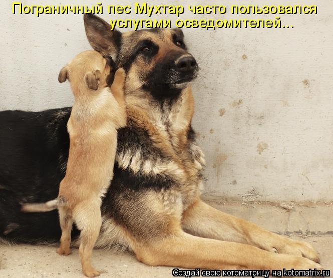 Котоматрица: Пограничный пес Мухтар часто пользовался  услугами осведомителей...