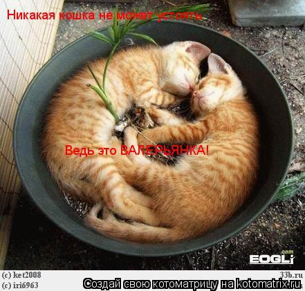 Котоматрица: Никакая кошка не может устоять Ведь это ВАЛЕРЬЯНКА!
