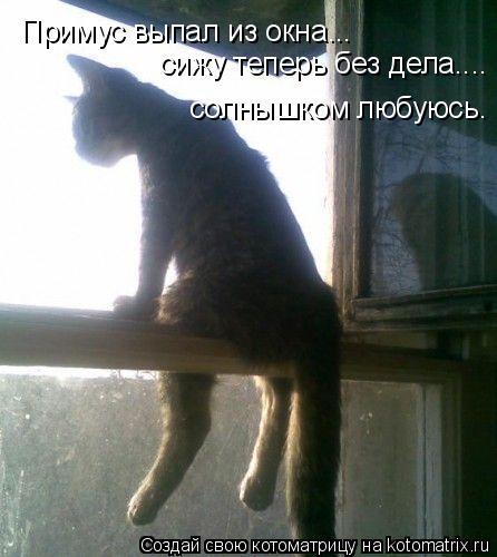 Котоматрица: Примус выпал из окна... сижу теперь без дела.... солнышком любуюсь.