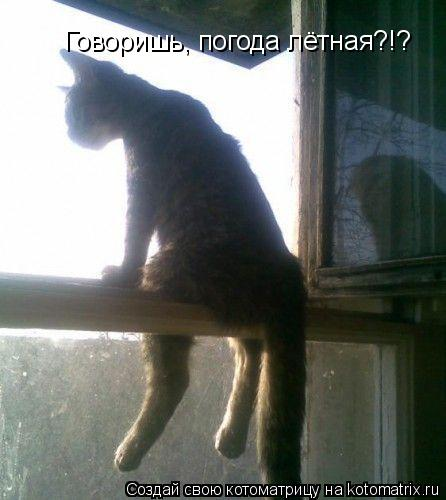 Котоматрица: Говоришь, погода лётная?!?