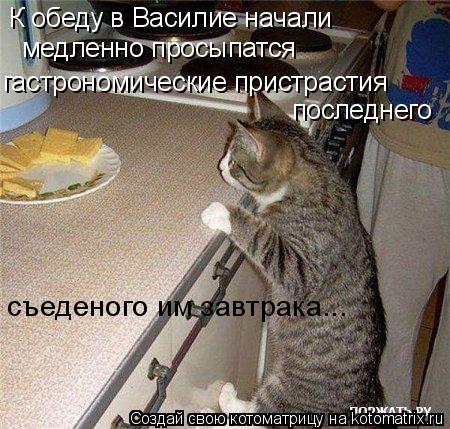 Котоматрица: К обеду в Василие начали  гастрономические пристрастия последнего  съеденого им завтрака...  медленно просыпатся