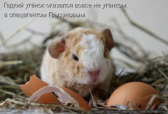 Котоматрица: Гадкий утёнок оказался вовсе не утёнком, а спецагентом Грызуновым.