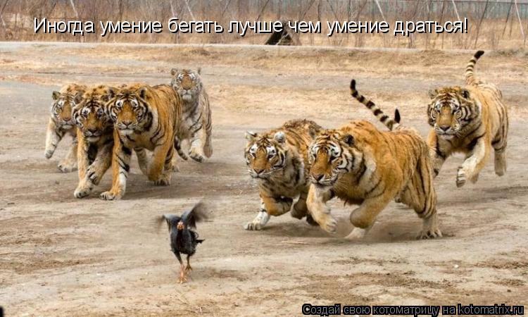 Котоматрица: Иногда умение бегать лучше чем умение драться!