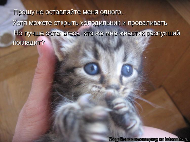 Котоматрица: Прошу не оставляйте меня одного.. Хотя можете открыть холодильник и проваливать Но лучше останьтесь, кто же мне животик распухший  погладит