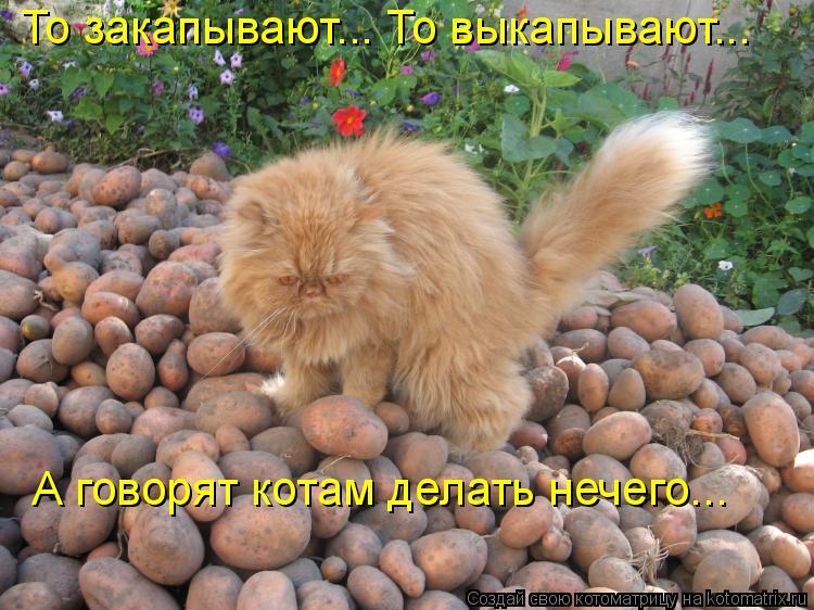 Котоматрица: То закапывают... То выкапывают...  А говорят котам делать нечего...