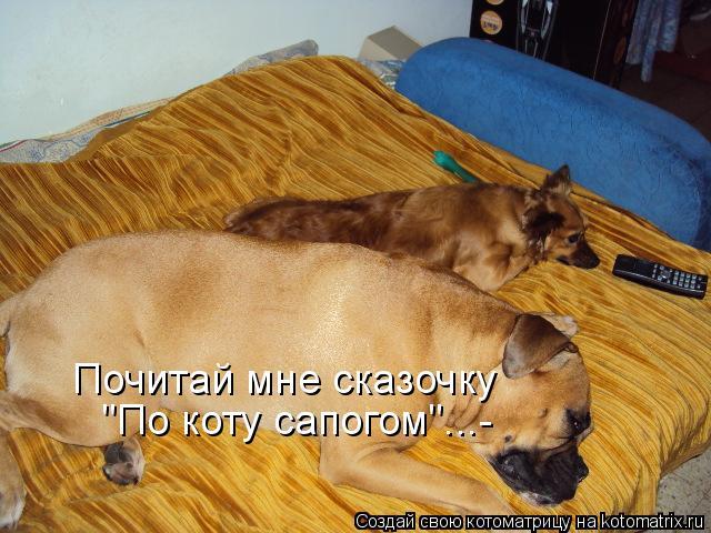 """Котоматрица: Почитай мне сказочку """"По коту сапогом""""...-"""