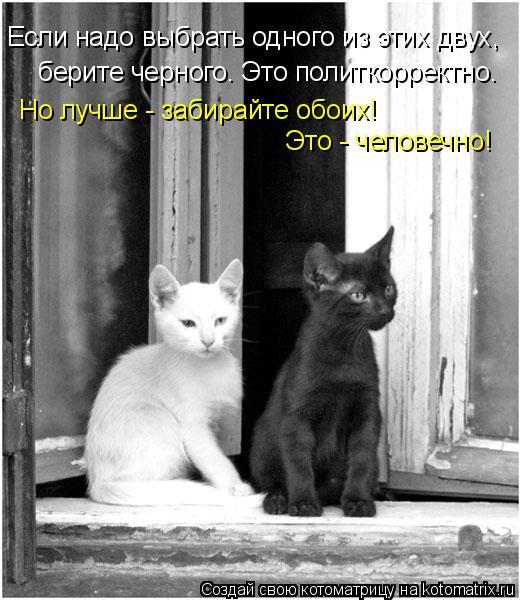 черная кошка черная кошка белый кот фото. черная кошка белый кот фото.