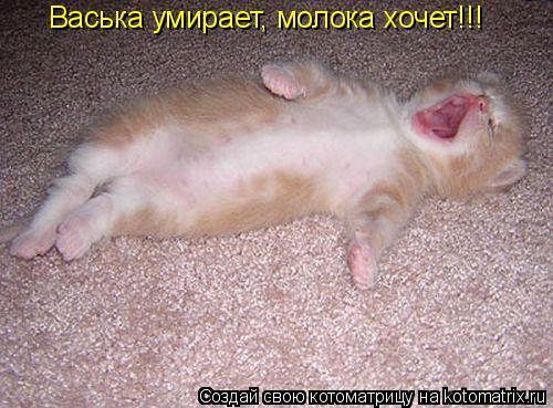 Котоматрица: Васька умирает, молока хочет!!!