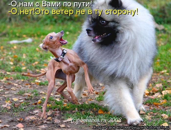 Котоматрица: -О,нам с Вами по пути! -О,нет!Это ветер не в ту сторону!