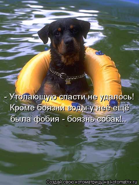 Котоматрица: - Утопающую спасти не удалось! Кроме боязни воды у неё ещё была фобия - боязнь собак!..